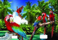 544 Zošit linajkový 8mm s 3D obalom, papagáje